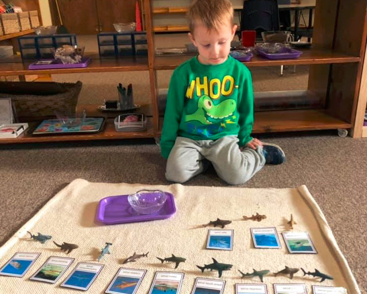 boy learning about sea animals at a Preschool & Daycare Serving Brighton, MI