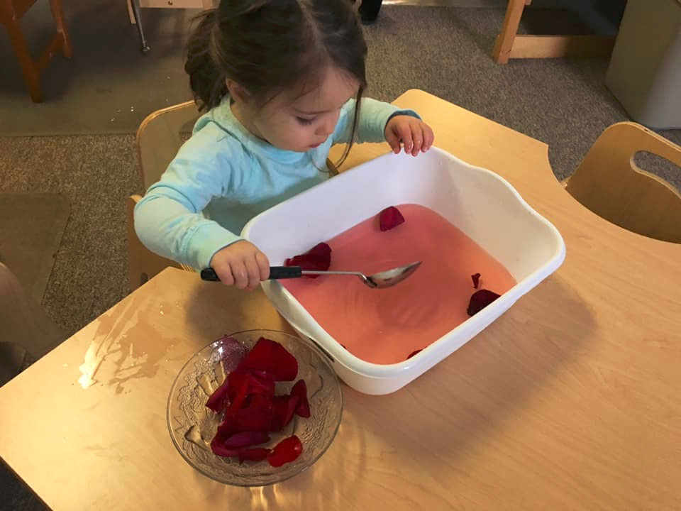 young girl playing with rose petals at a Preschool & Daycare Serving Brighton, MI